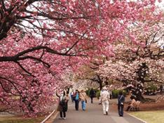 Khám phá 5 lễ hội đặc sắc nhất tại Nhật Bản trong tháng 4